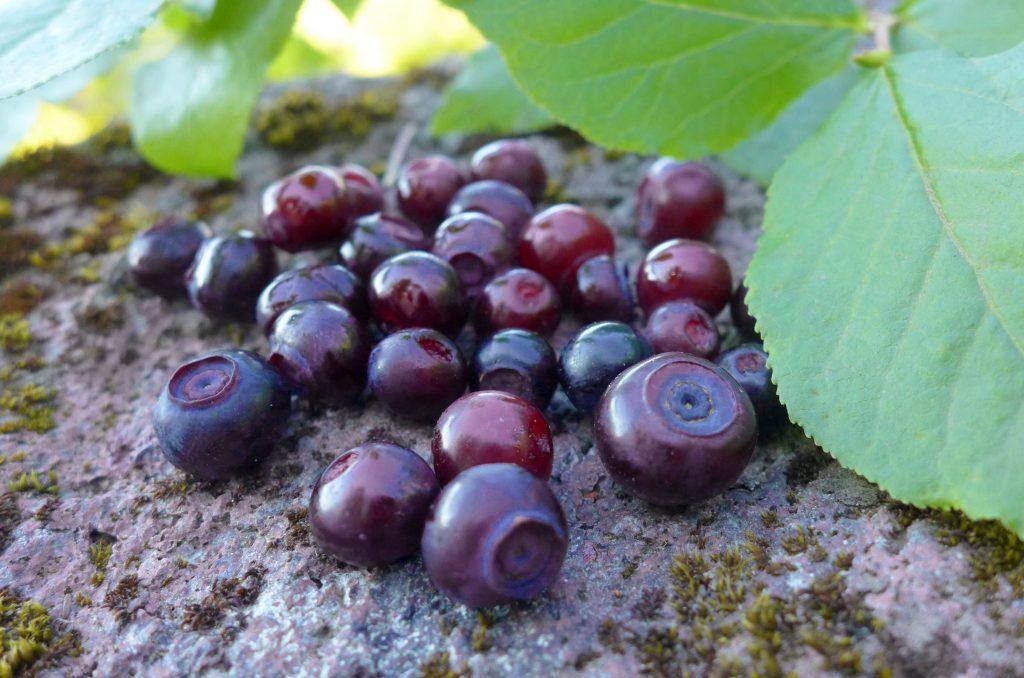Maionberries